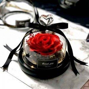 Eterna rosa vermelha real sob o sino de vidro com luzes