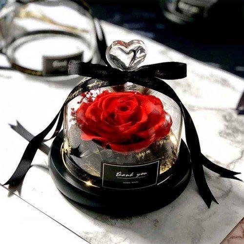 Rose Éternelle Rouge Véritable Sous Cloche en Verre avec Lumières
