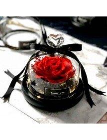 Amžina raudona rožė tikra po stikliniu varpu su žibintais