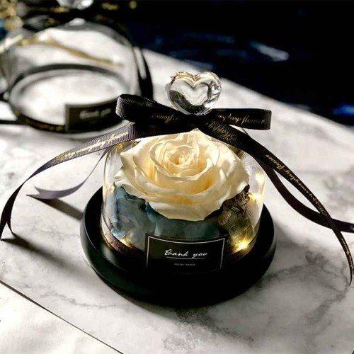 Rosa Eterna Bianco Vero Sotto la Campana di Vetro con Luci