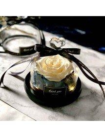 Rosa Eterna Blanco, Bajo la Campana de Vidrio con Luces