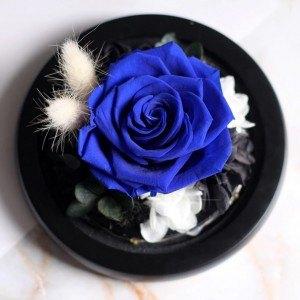 Roz Etern Albastru Adevărat Sub Clopot de Sticlă și Lumini