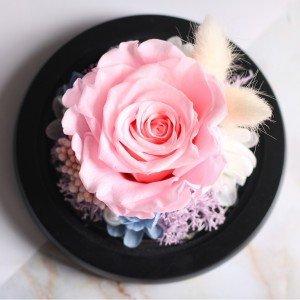 Rosa Eterna Rosa, Bajo la Campana de Vidrio y Luces