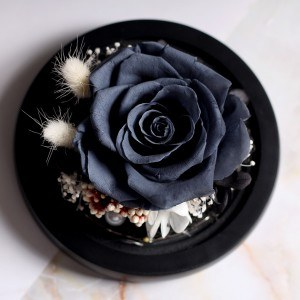 Eternal black rose real under bell in glass and lights