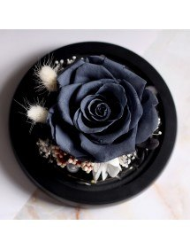 Örök fekete rózsa valódi harang alatt üvegben és fényekben