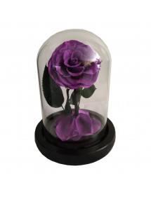 Eternal Rose Flower Purple Campanella premium genuina e confezione regalo 2