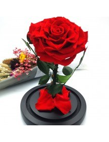 Fleur Rose Éternelle Rouge Véritable Premium Cloche Et Boîte Cadeau 3