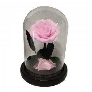 Eternal Rose Flower Rose Campanella premium genuina e confezione regalo 2