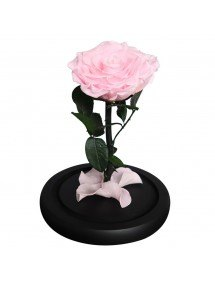 Eternal Rose Flower Rose Campanella premium genuina e confezione regalo 3