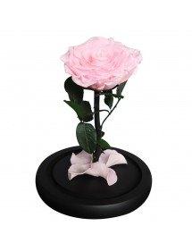 Fleur Rose Éternelle Rose Véritable Premium Cloche Et Boîte Cadeau 3