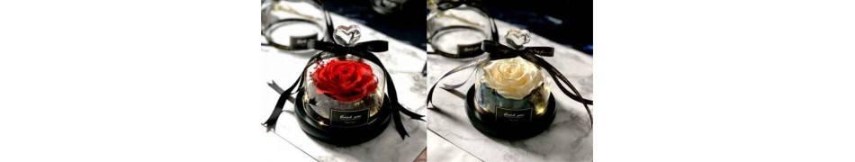 [L&D] Rosas Eternas